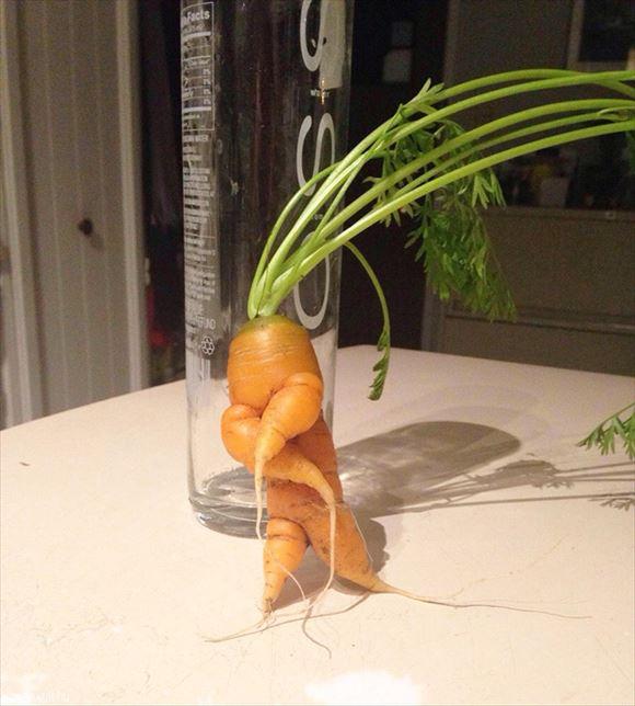 奇形野菜 35
