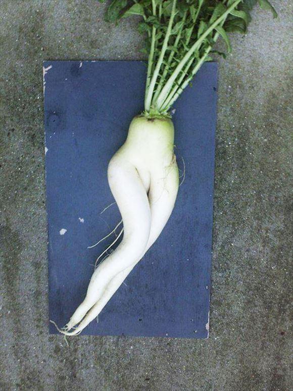 奇形野菜 38