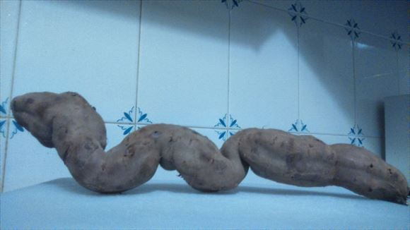 奇形野菜 39