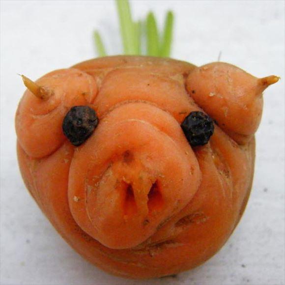 奇形野菜 45