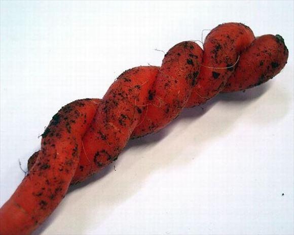 奇形野菜 49