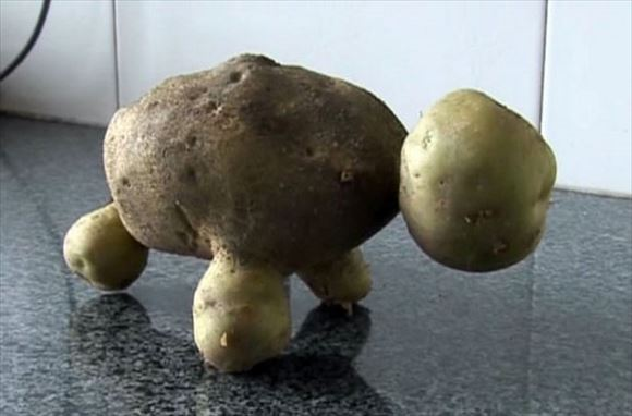 奇形野菜 54