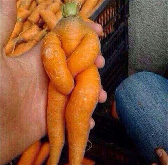 奇形野菜 7
