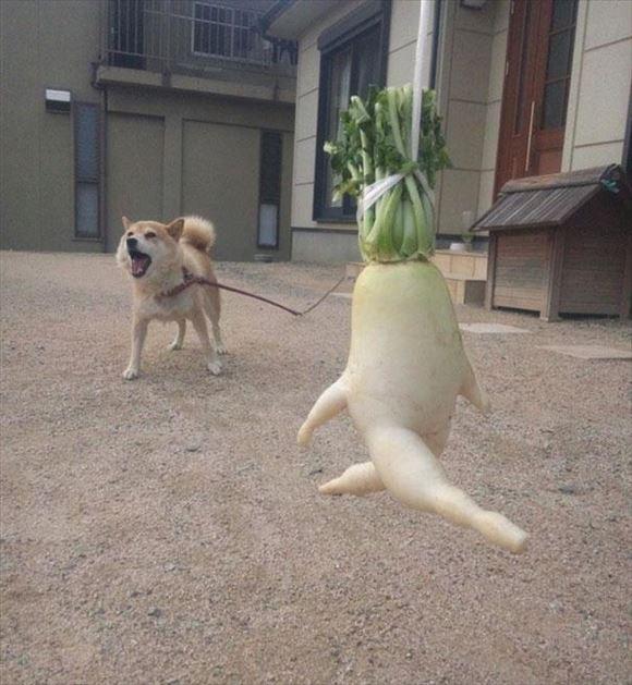 奇形野菜 9