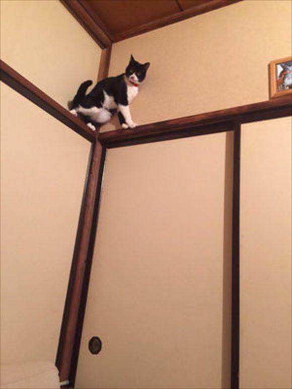 忍者猫 1