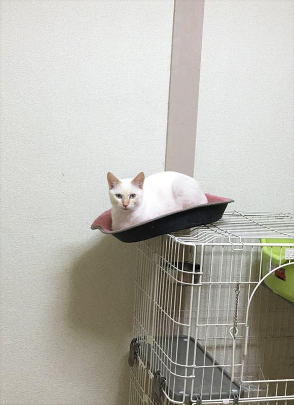 忍者猫 10