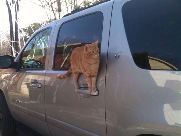 忍者猫 11
