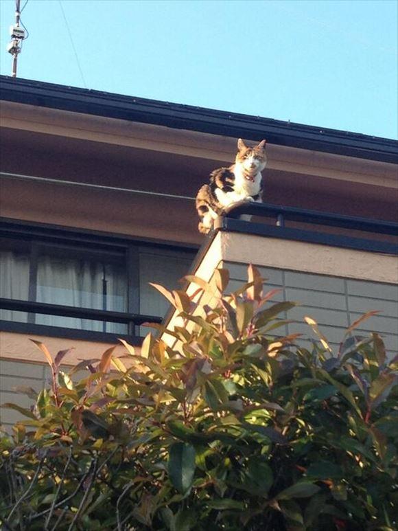 忍者猫 13