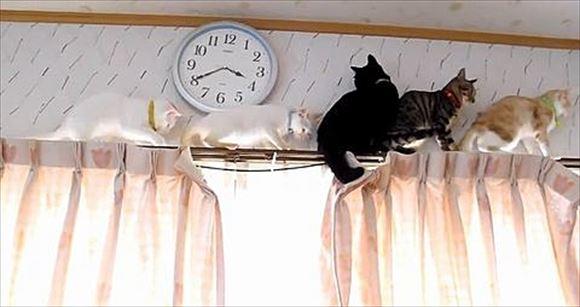 忍者猫 29