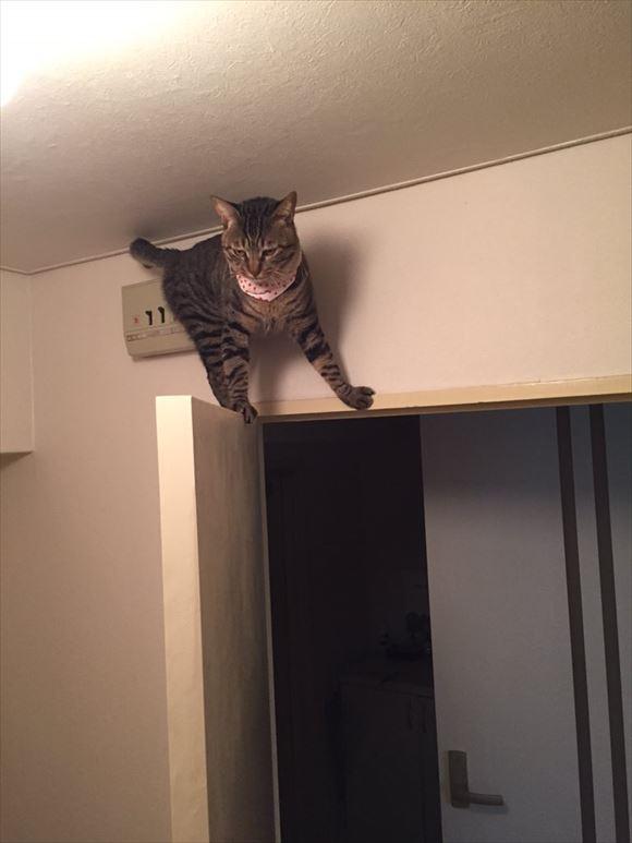 忍者猫 3