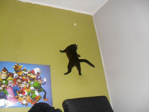 忍者猫 40