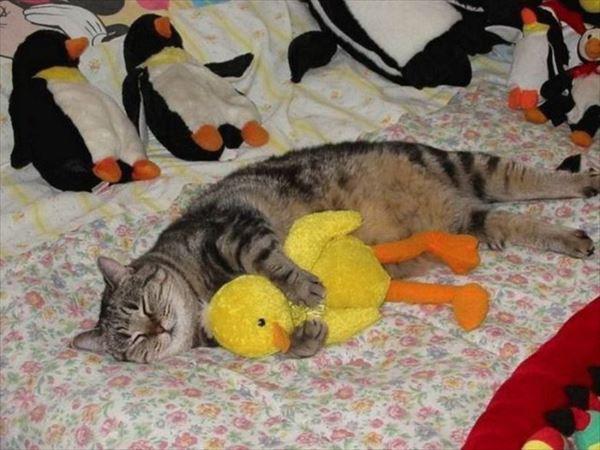 抱き合う猫 10