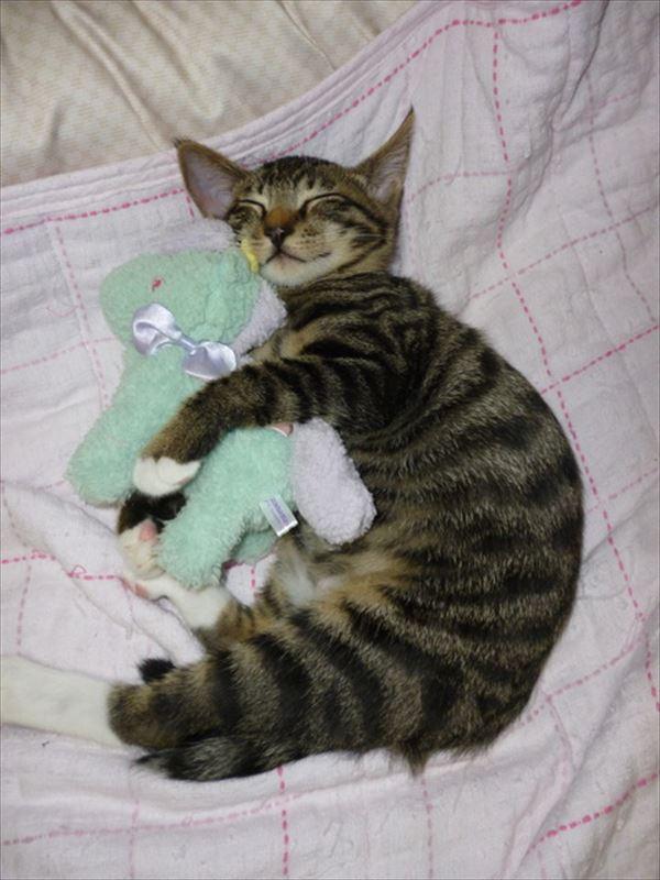 抱き合う猫 11