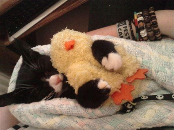 抱き合う猫 12