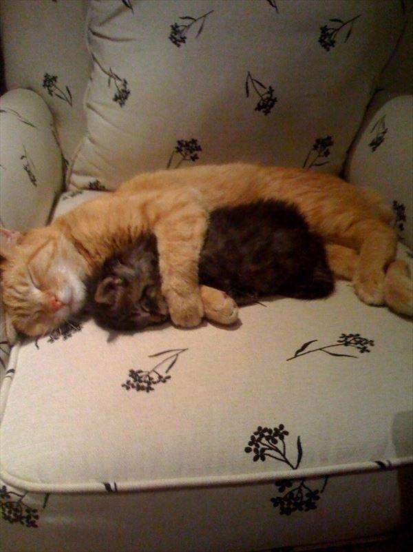 抱き合う猫 15