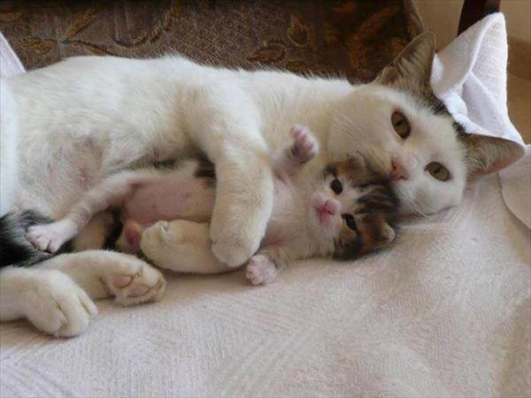 抱き合う猫 22
