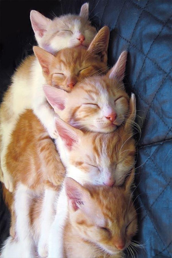 抱き合う猫 23