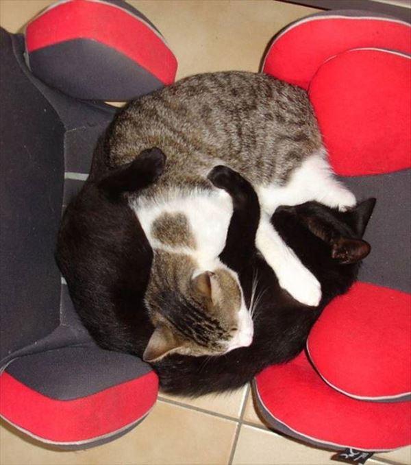 抱き合う猫 24