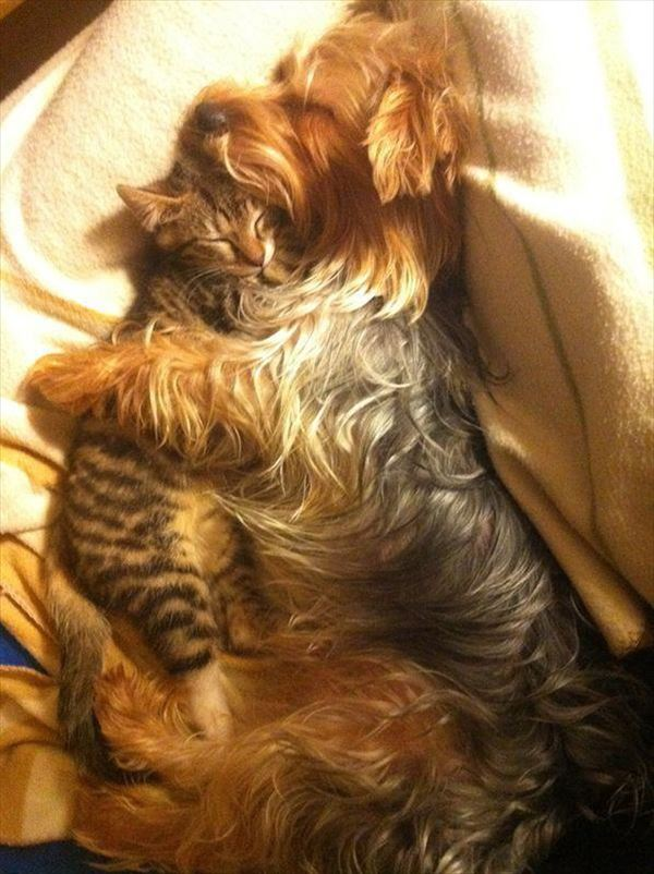 抱き合う猫 27