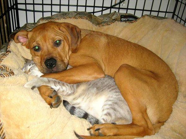 抱き合う猫 28