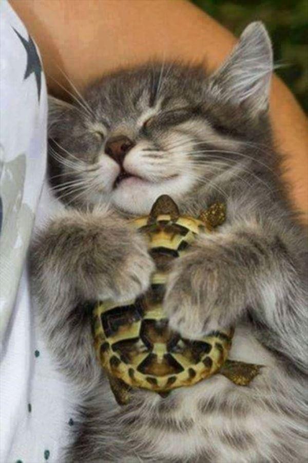 抱き合う猫 3