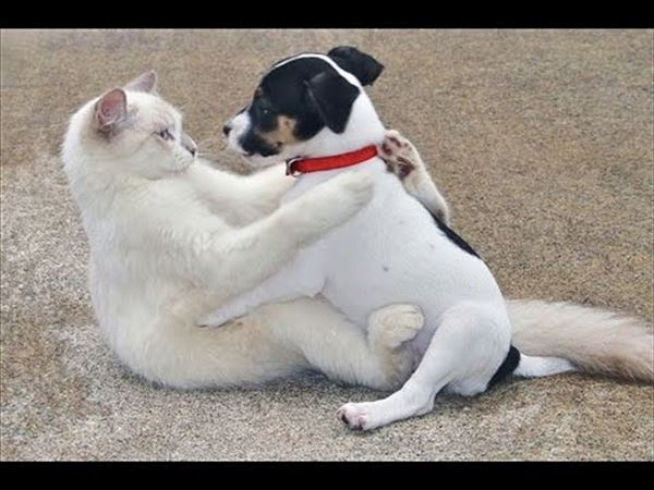 抱き合う猫 31
