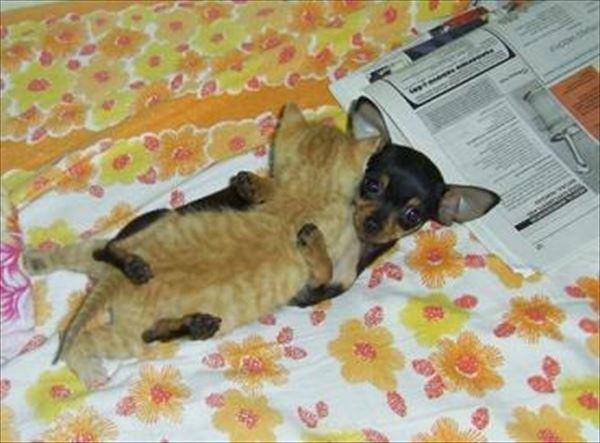 抱き合う猫 33