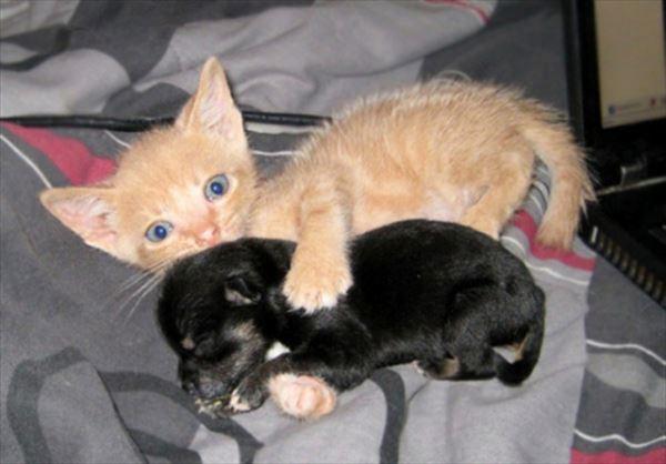 抱き合う猫 35
