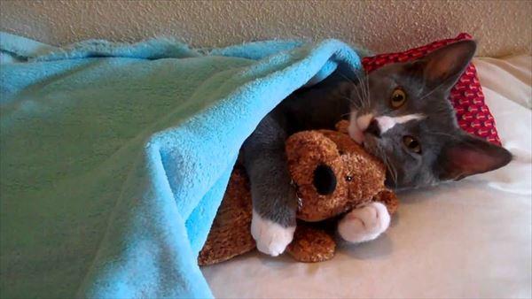 抱き合う猫 36