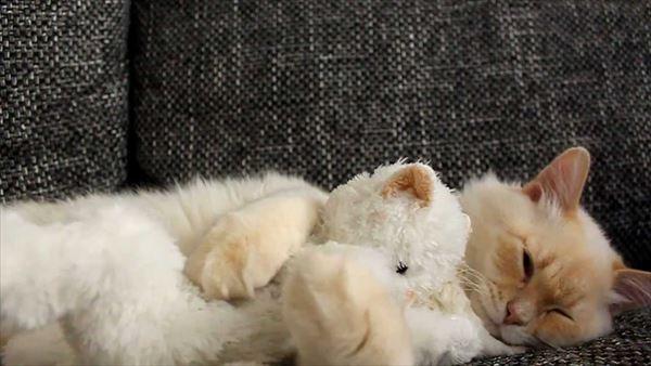 抱き合う猫 37