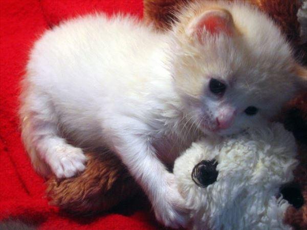 抱き合う猫 38