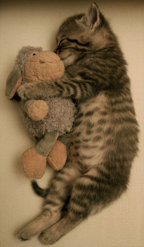 抱き合う猫 4