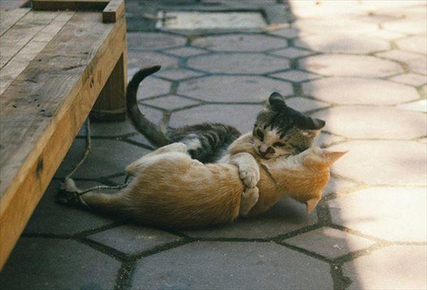 抱き合う猫 40