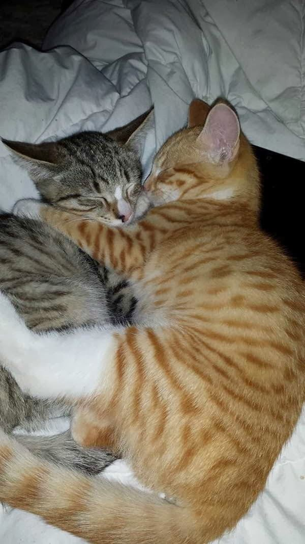 抱き合う猫 41