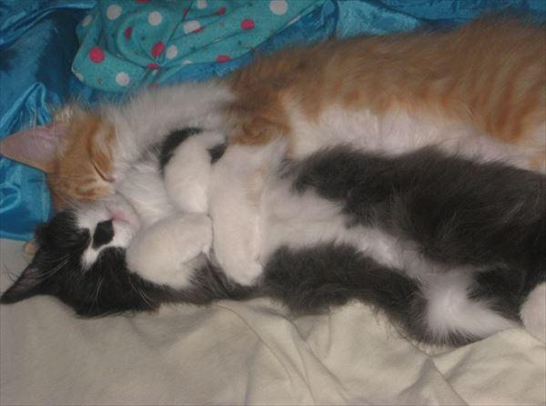 抱き合う猫 42