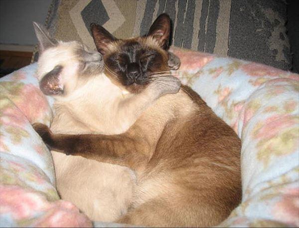 抱き合う猫 43