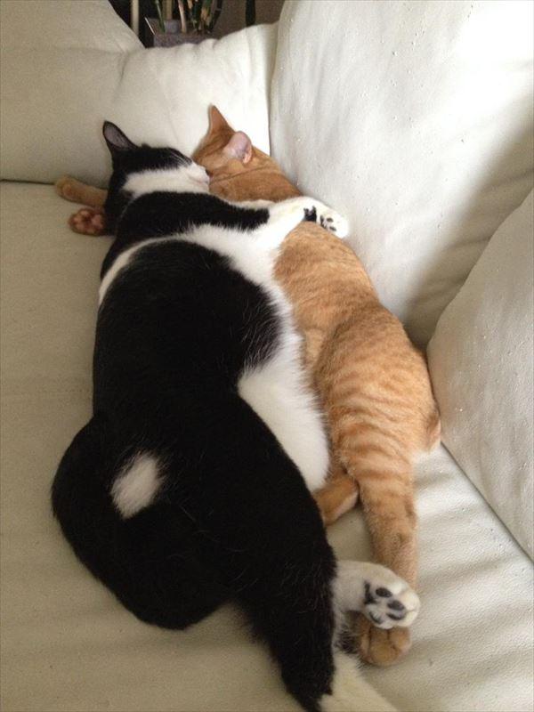 抱き合う猫 45