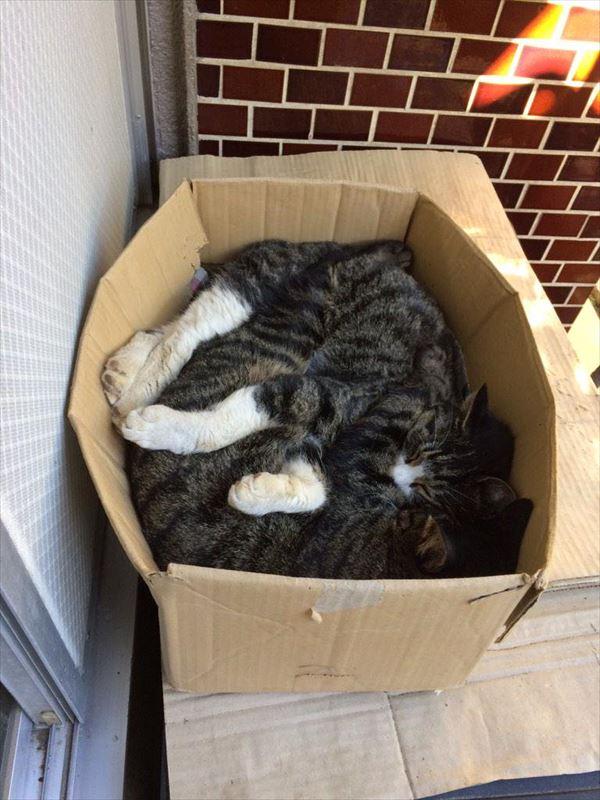 抱き合う猫 46