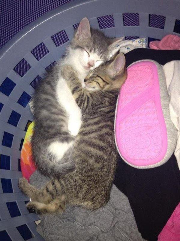 抱き合う猫 47