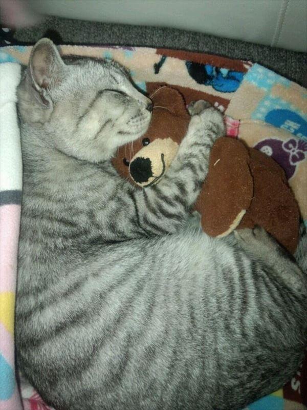 抱き合う猫 5