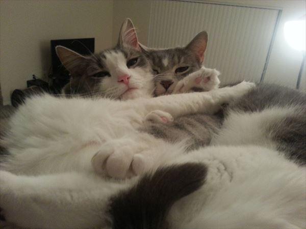 抱き合う猫 51
