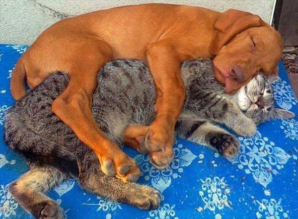 抱き合う猫 52