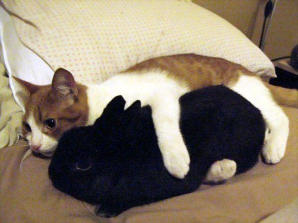 抱き合う猫 53