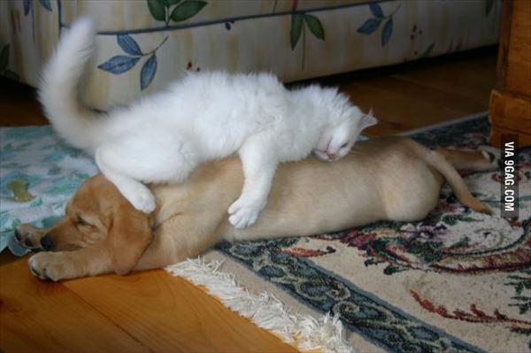 抱き合う猫 54