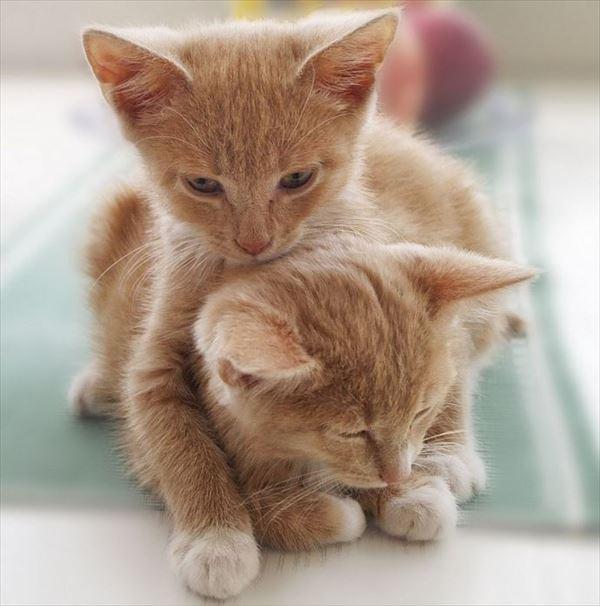 抱き合う猫 55
