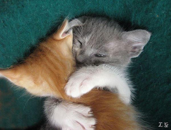 抱き合う猫 56
