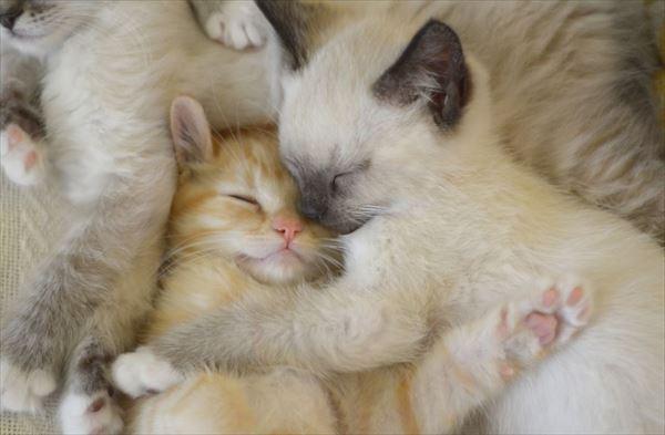 抱き合う猫 58