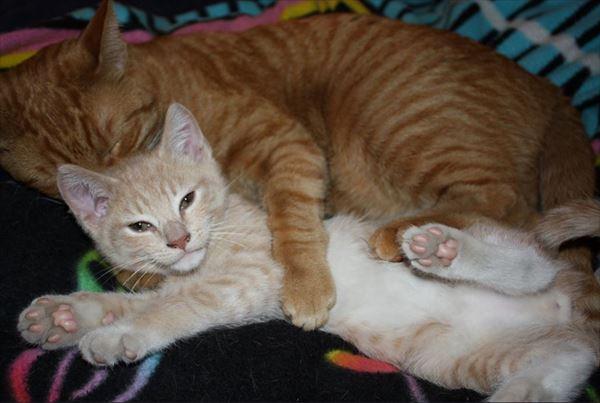 抱き合う猫 59