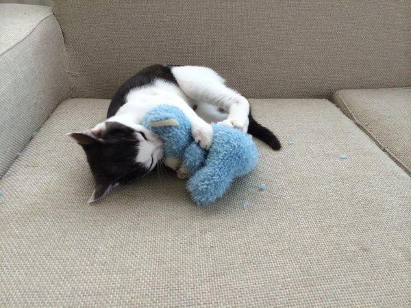 抱き合う猫 6