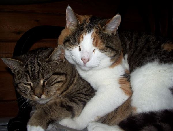 抱き合う猫 61